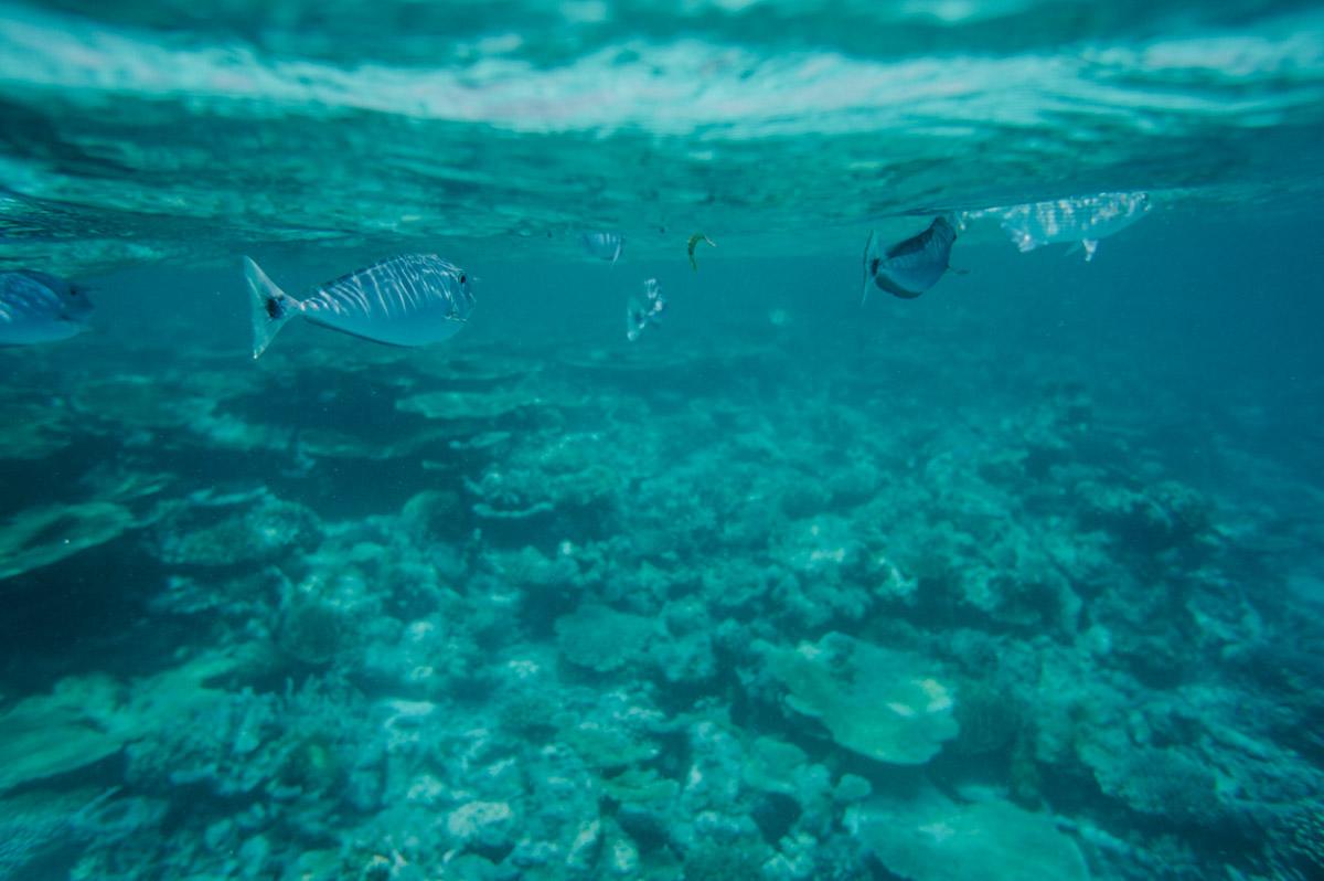 Malediven-web-13